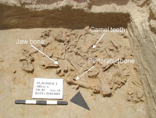 Dating Knochen Archäologie Leo Frau aus einem virgo Mann